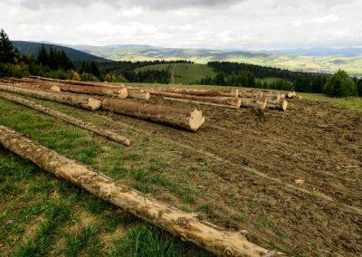 Vyťažené drevo z Javorovej.