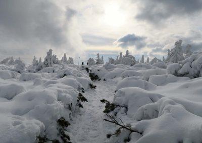 Kosodrevina je pod snehom.